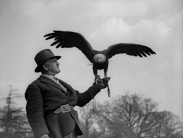 Master And Bird